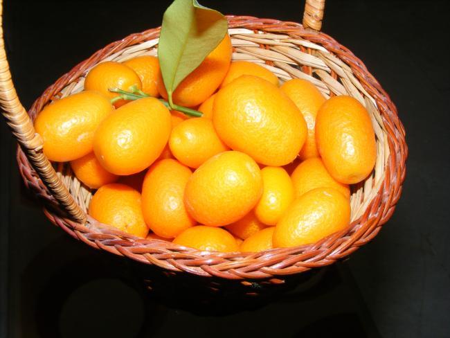 Kamkat Meyvesi