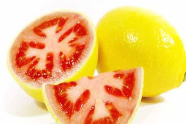 Gdo'lu Limon